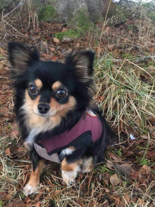 Hunden som bjeffet og fikk snakke med dyretolk