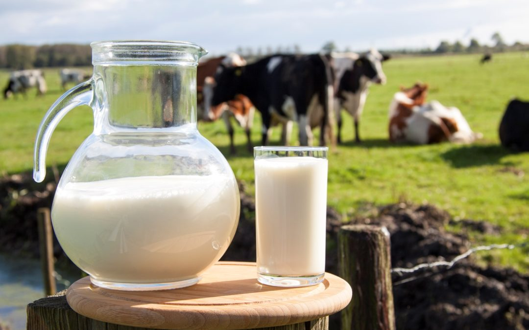 Forskning viser at økologisk melk er sunnere