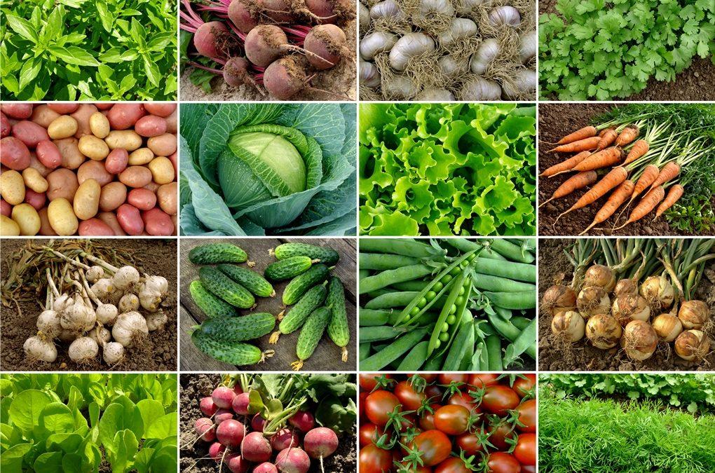 Økologisk mat er sunnere, men EUs konkurransemyndigheter ville holde det hemmelig