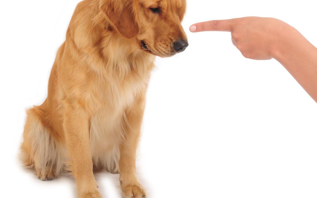 Hunden som ville at menneskenes hender skulle henge «trygt ned»