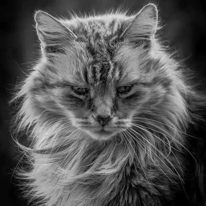 Katten som måtte greie seg alene da eieren døde