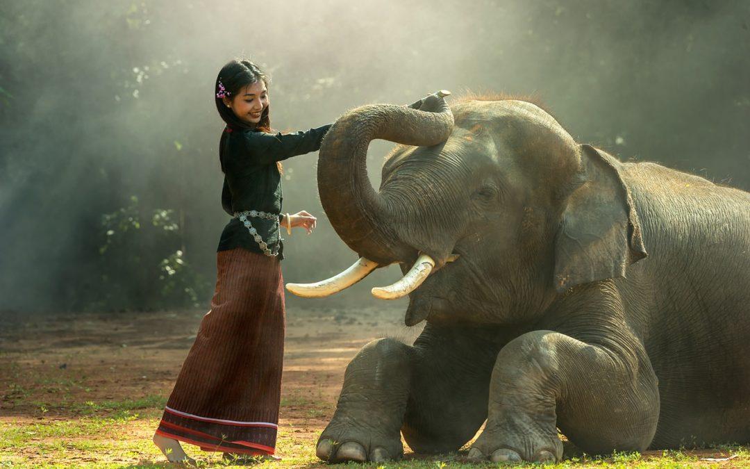 Lyst til å ri på elefant?