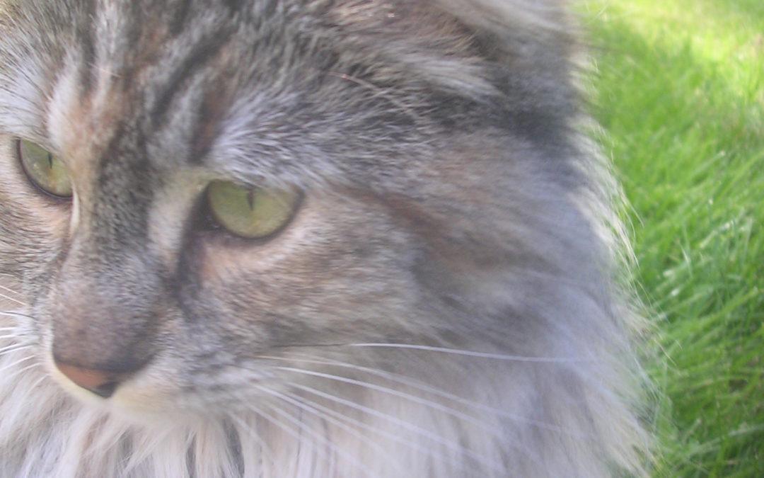 Katten som gav familien en hilsen etter sin død