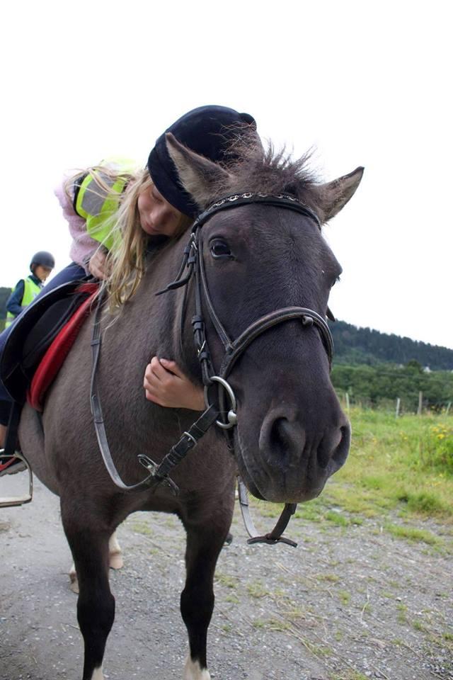 Mattilsynet drepte ponnier og feil dyr!