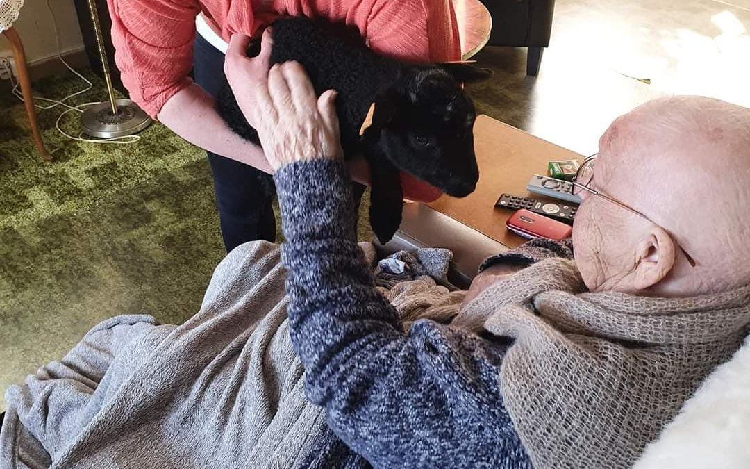 Oldemor på 102 år fikk besøk av kopplammet