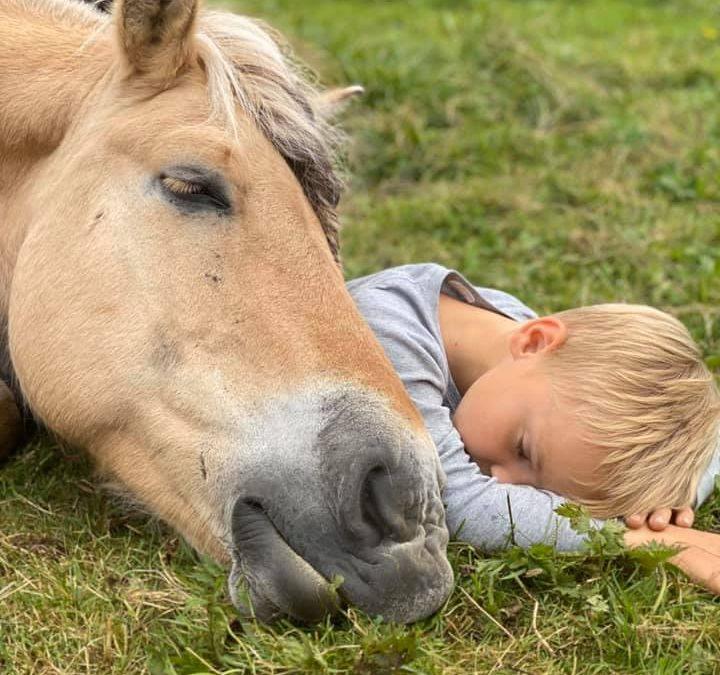 Hesten og gutten