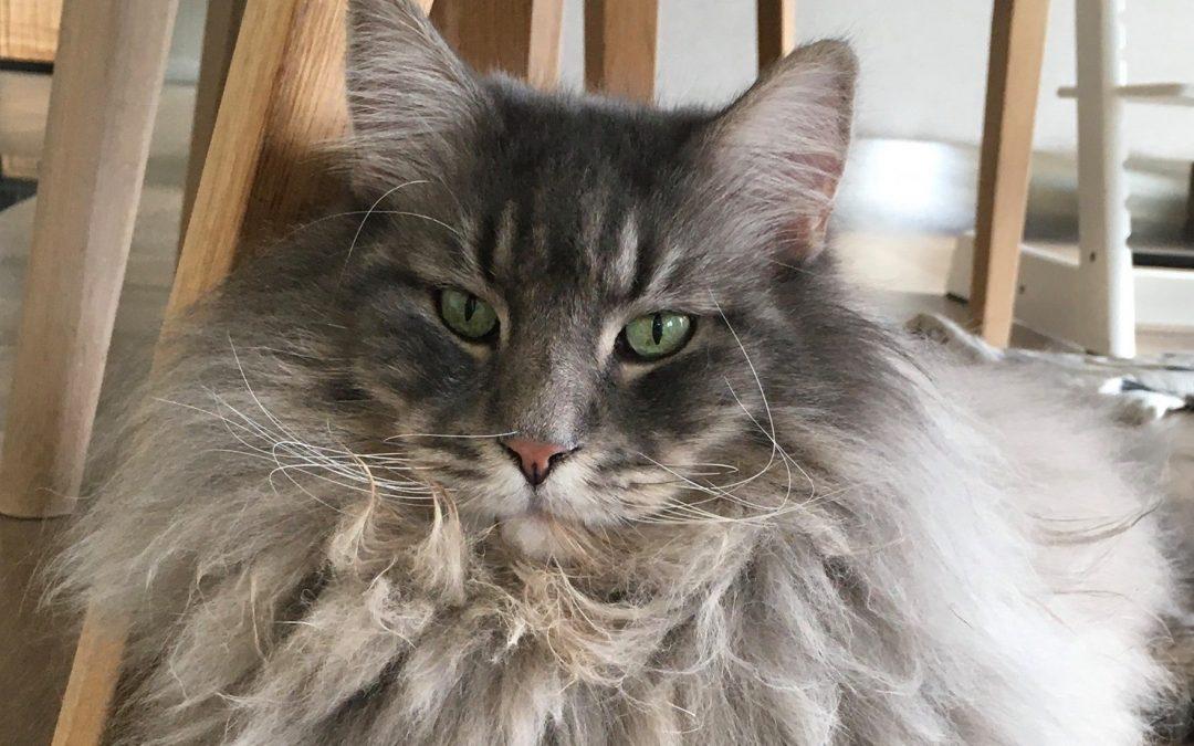Katten som fikk matmor til å ta opp gamle ferdigheter