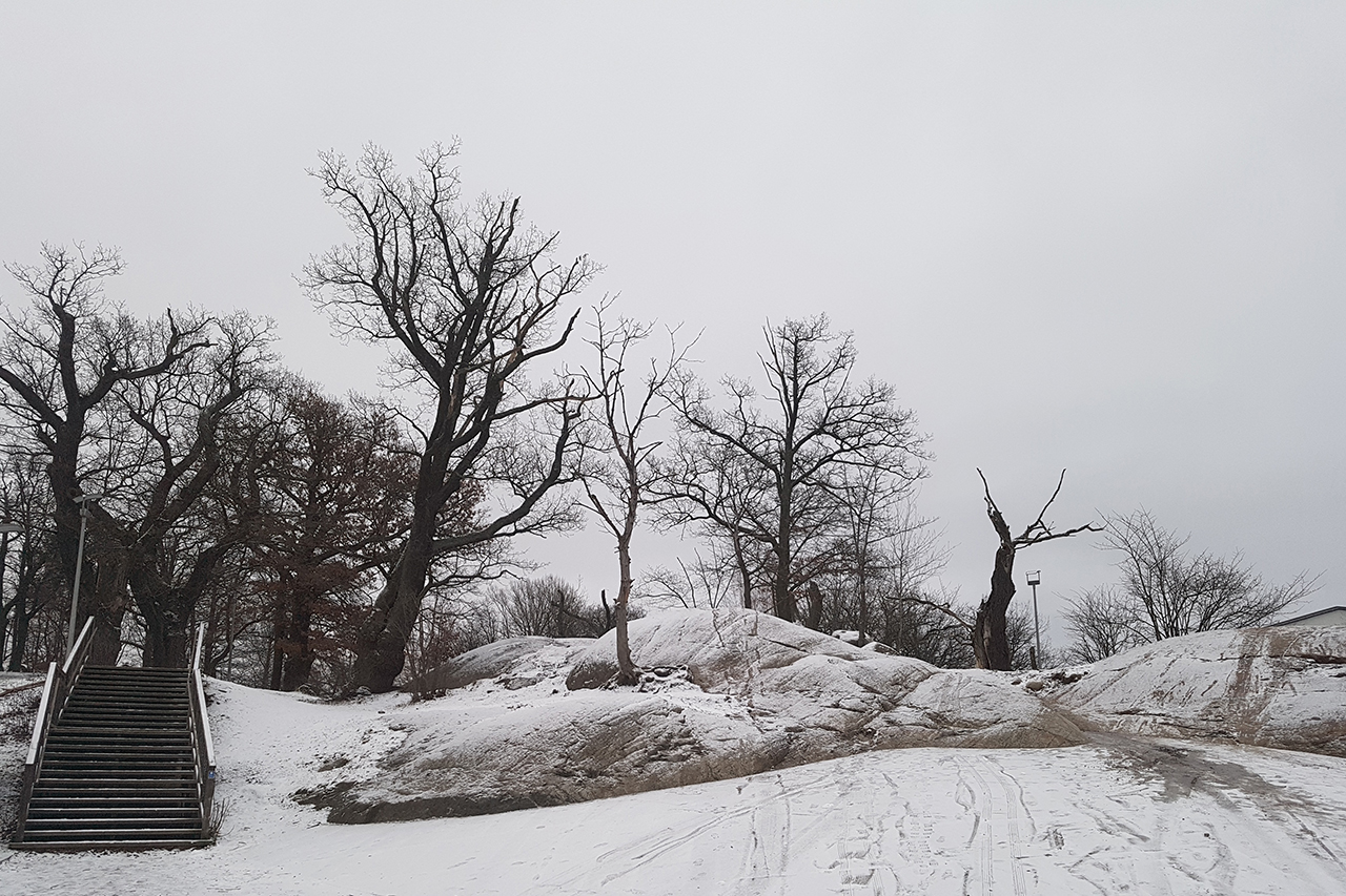 Ekarna i Sickla park i Hammarby Sjöstad