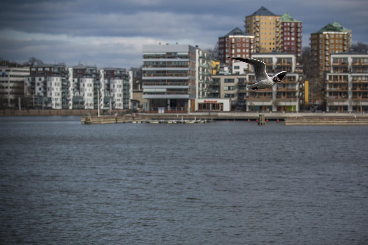 Fågel svävar över Hammarby sjö