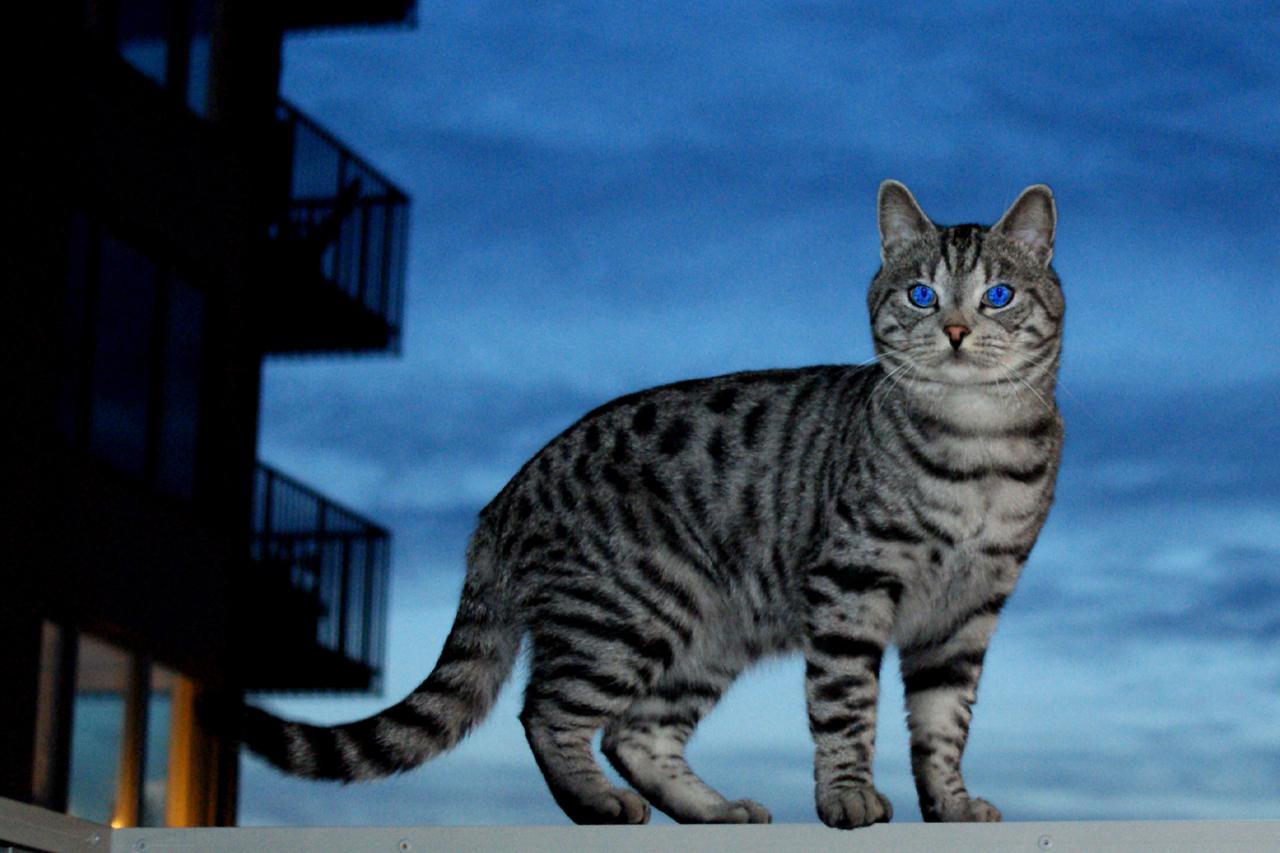 Katt i Hammarby Sjöstad