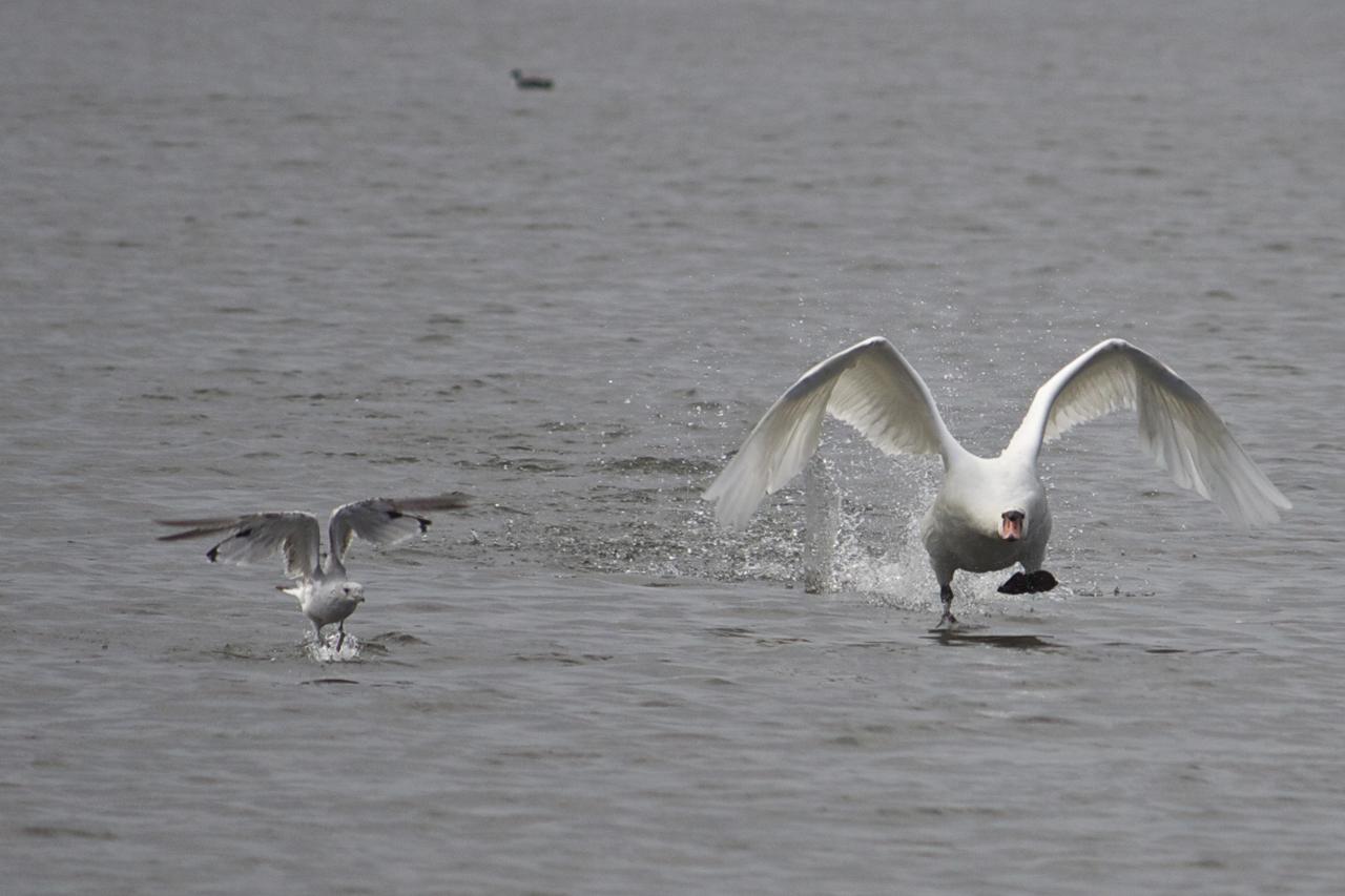Tävling i Hammarby sjö