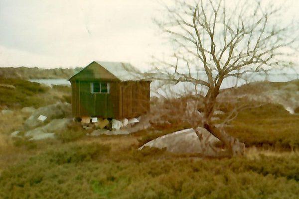 old_cottage_tree