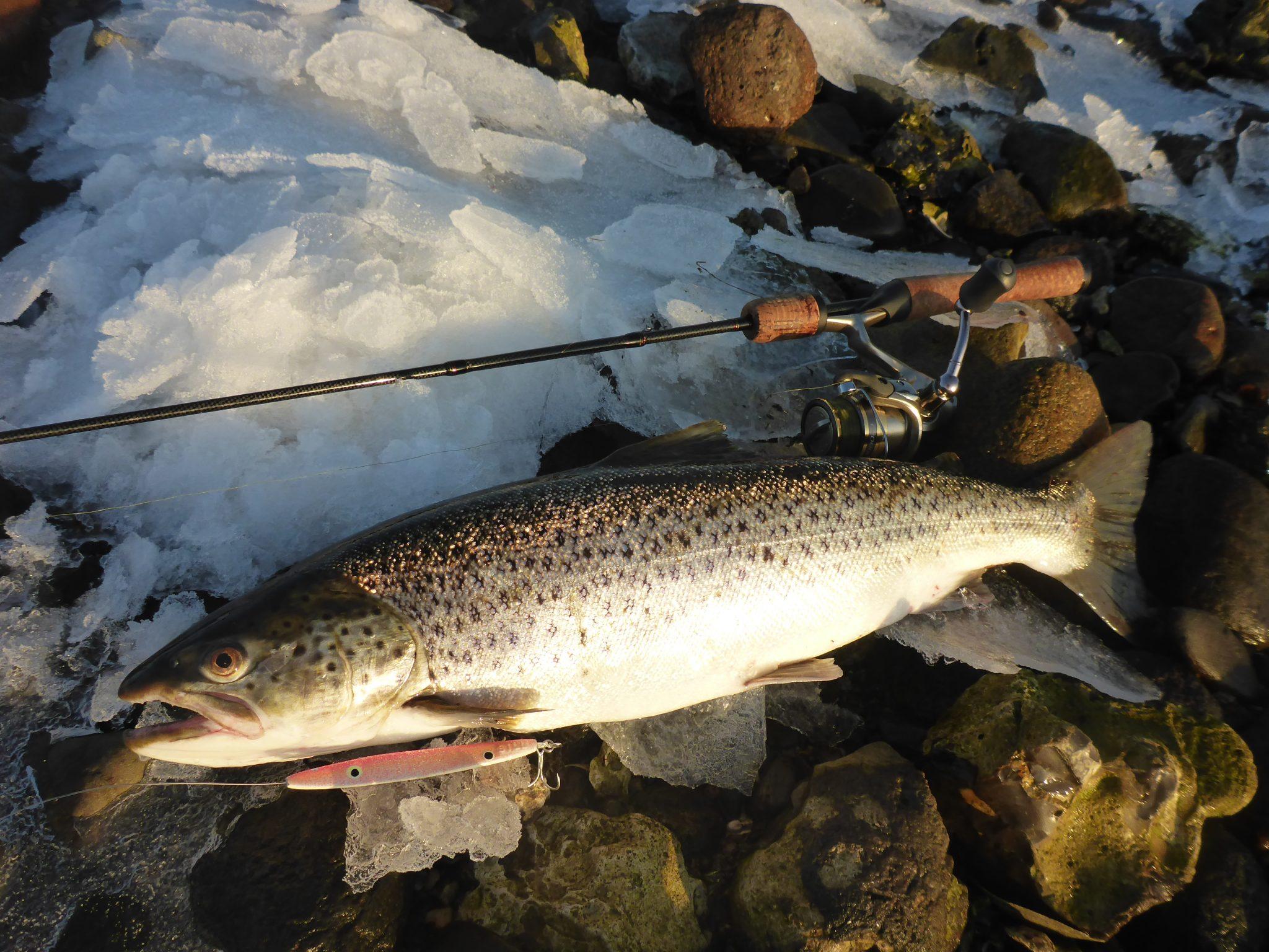 lystfiskeri i Skive Fjord om vinteren, er fangstgivende når det kommer til havørreder.
