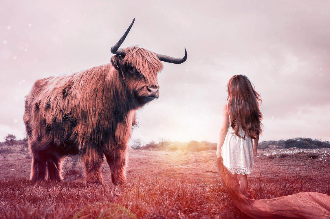 Er du ikke mer verdt enn et dyr? Skogfrue.no