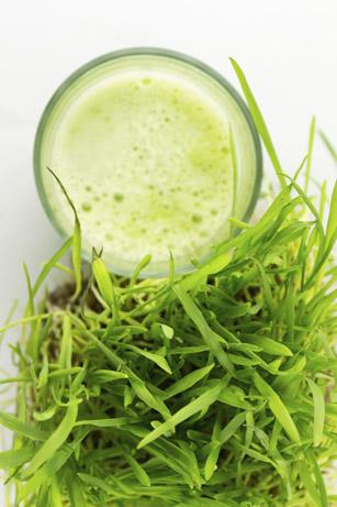 Weizengras für Slow Juicer