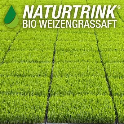Weizengrassaft Naturtrink