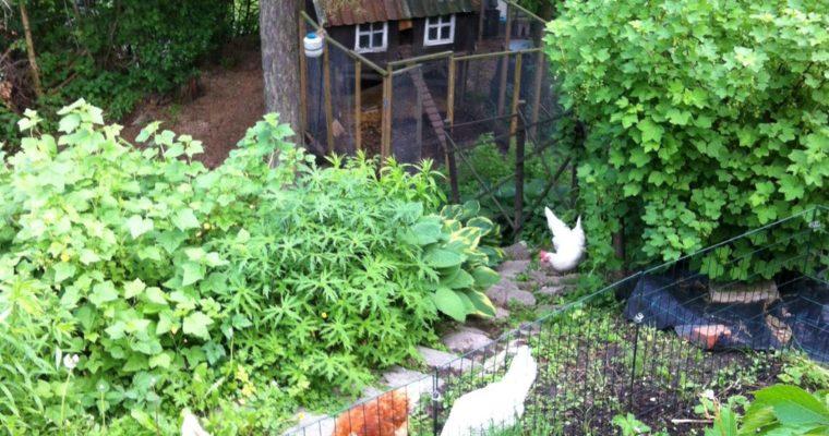 Kan jeg drive med selvforsyning i en vanlig hage?