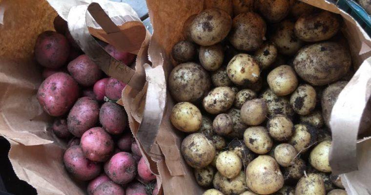 Dyrk poteter fort og greit i pallekarm!