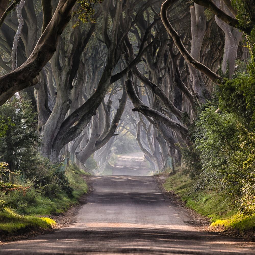 Dark-Hedges-Northern-Ireland Taxi Tours