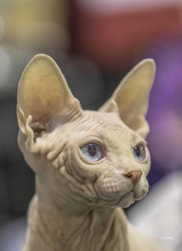 Nya djurskyddsregler för kattägare