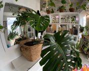 Cluttercore - Plante