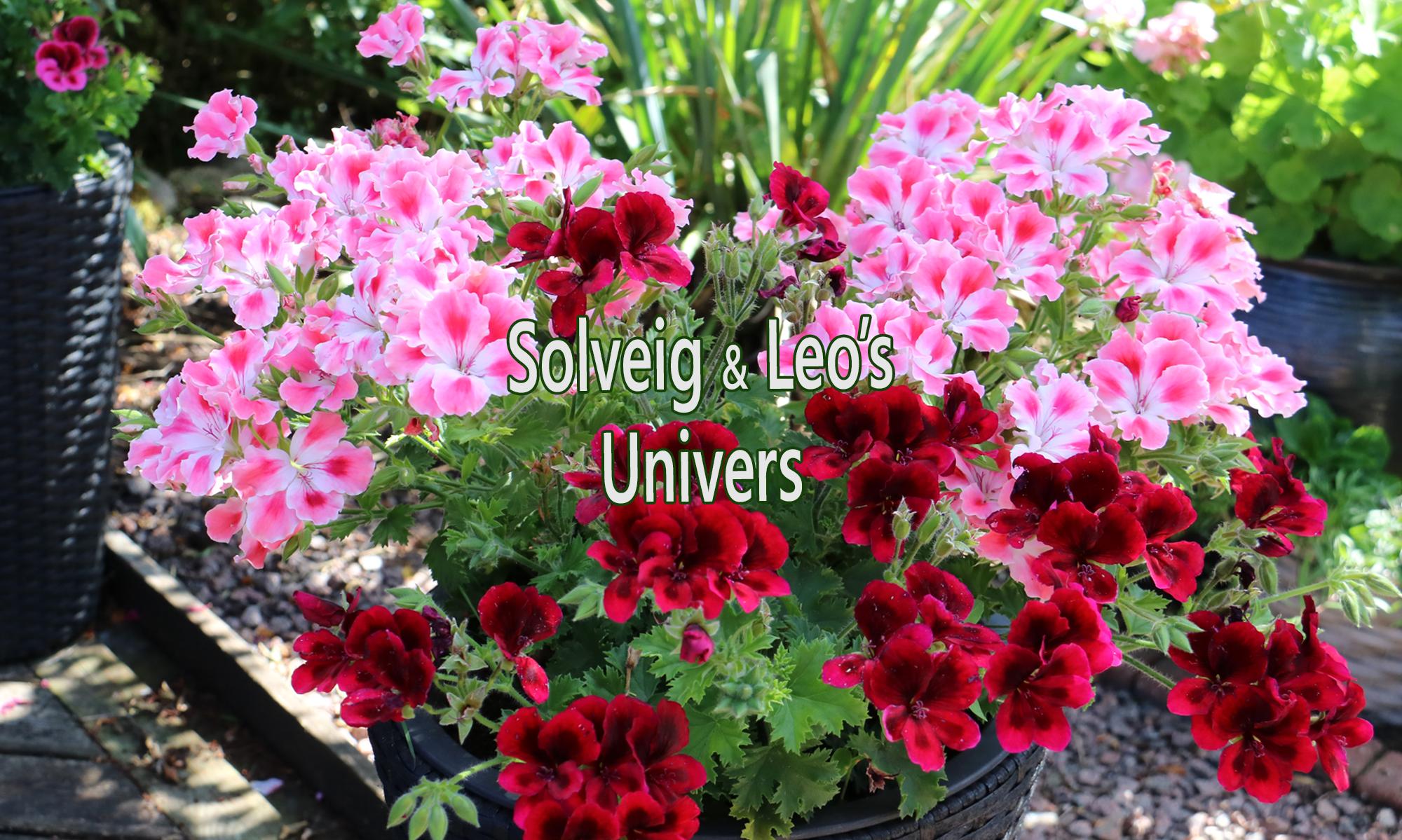 Solveig & Leos Univers
