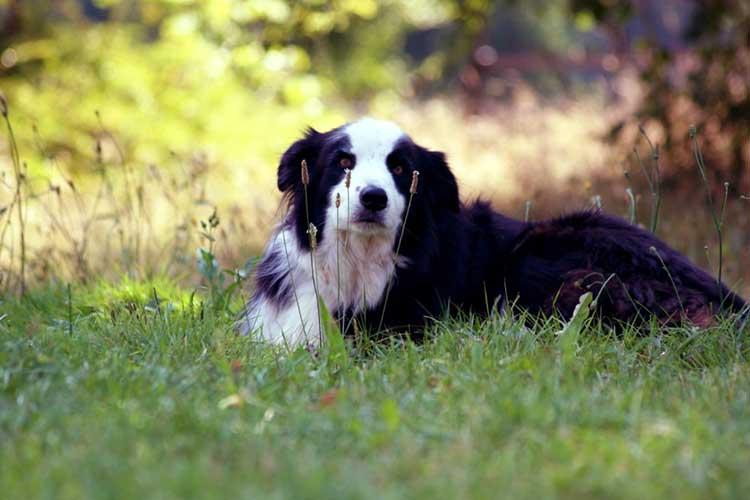 hond soulhorses