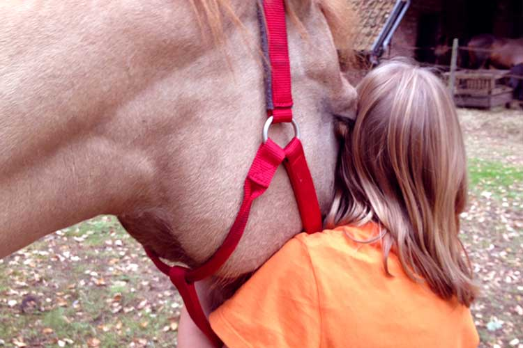 Natuurbeleving soulhorses paarden