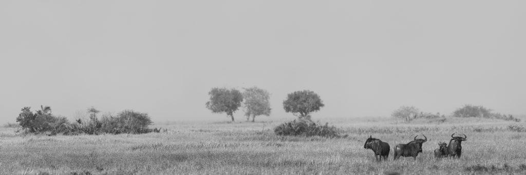 Landscapes28