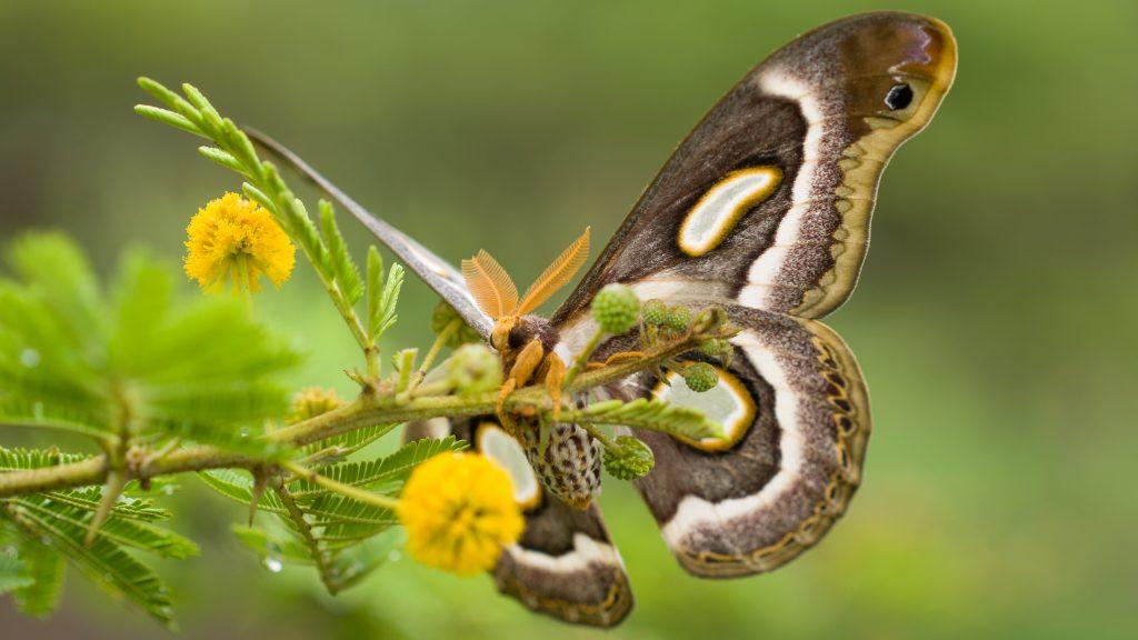 Wildlife33