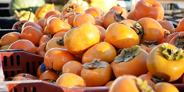 Persimmon Exotic Fruits