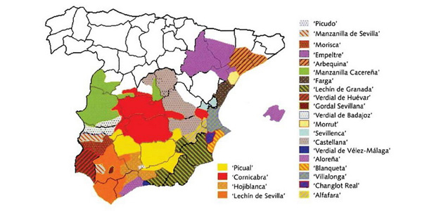Olive oil map, Spain