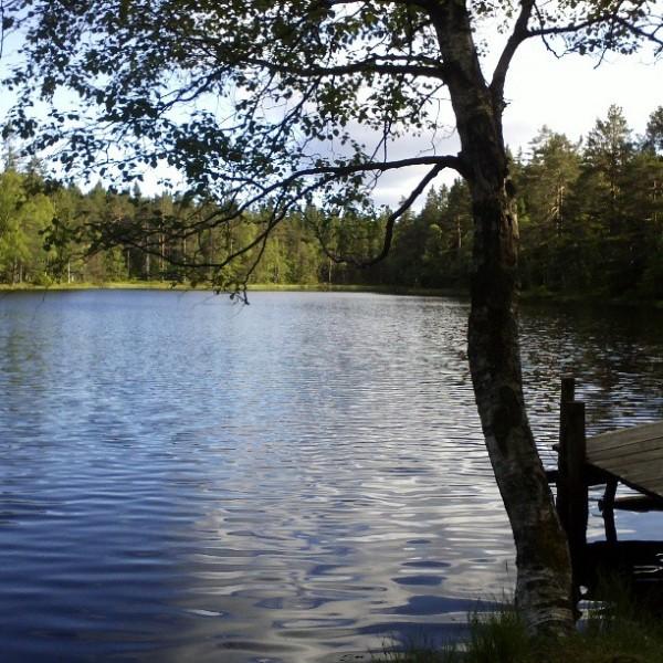 Lauvtjern, Østmarka