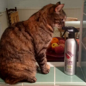 Squeeky natual multi purpose cleaner bottle with cat