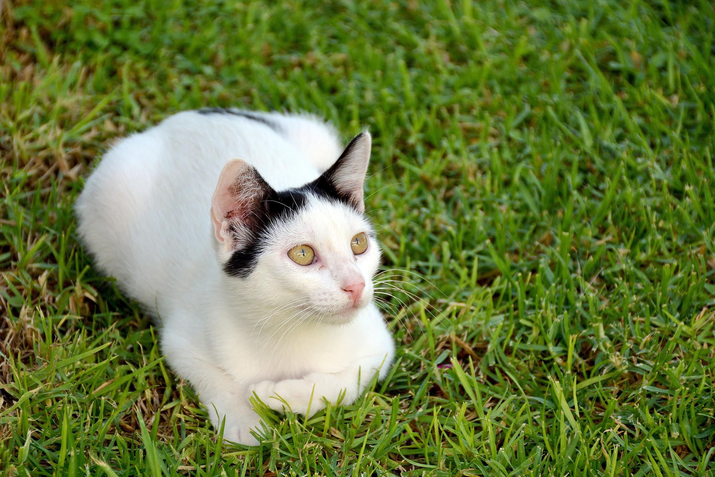 Katt Kos