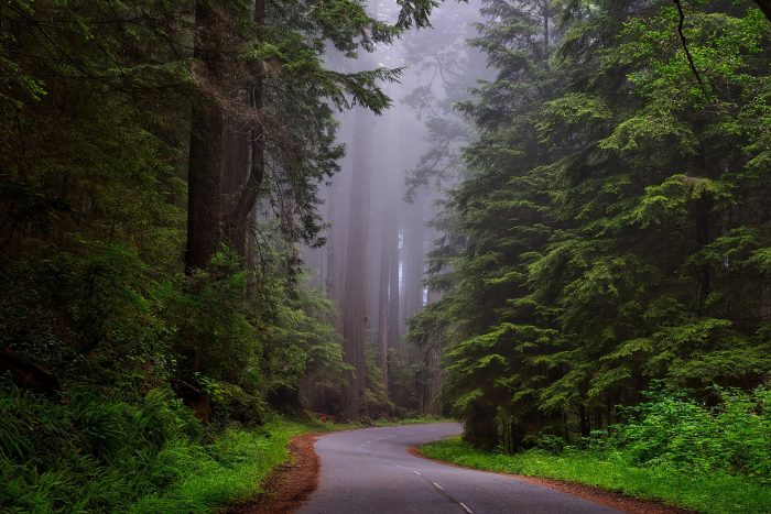 Redwood National Park.