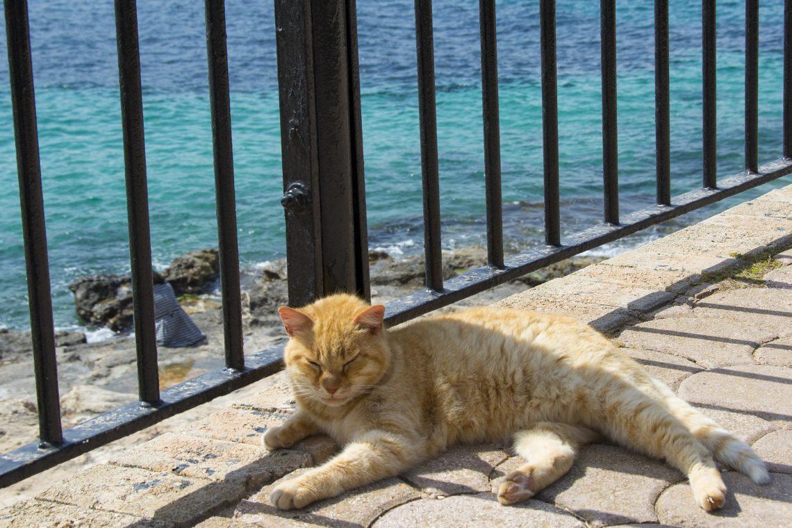 Katt Independence Park Malta