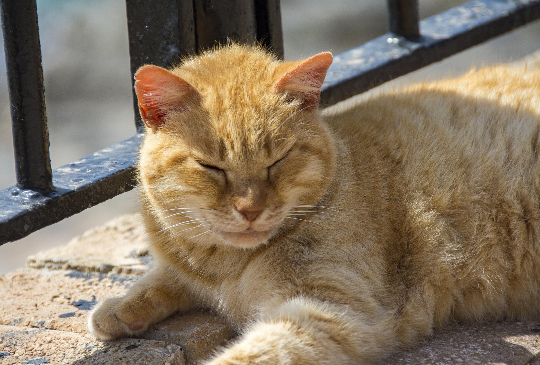 orange katt independence park