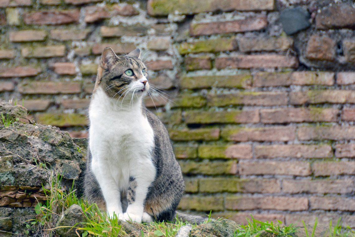 Torre Argentina Cat Sanctuary