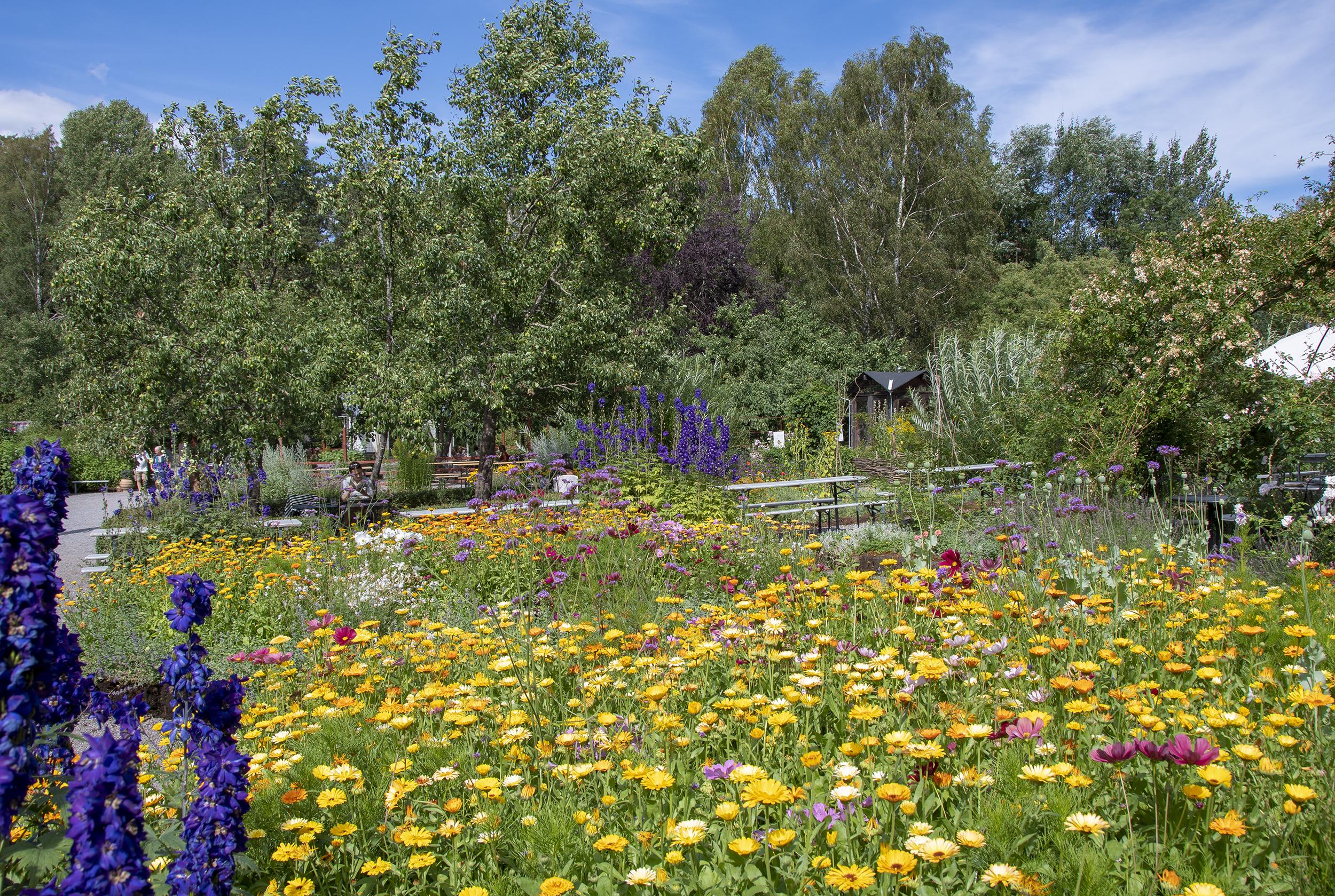 vintervikens trädgård blommor 1