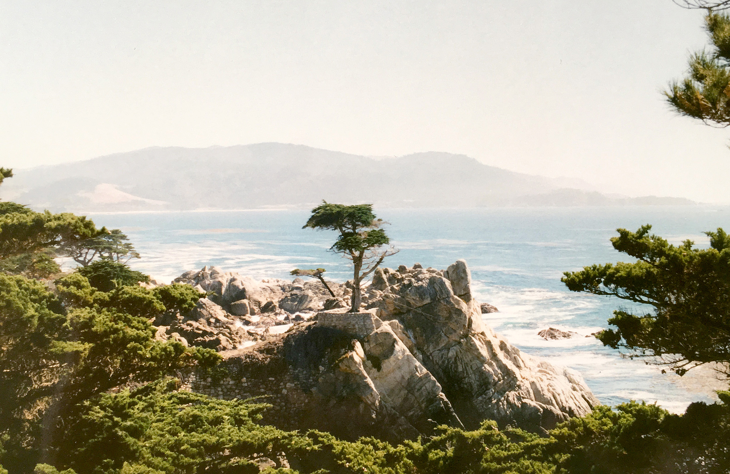 Lone Cypress på Pebble Beach