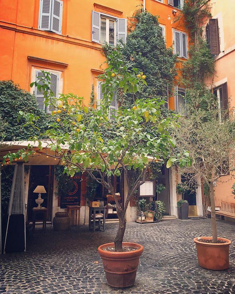 Citronträd Fontana di trevi italien rom