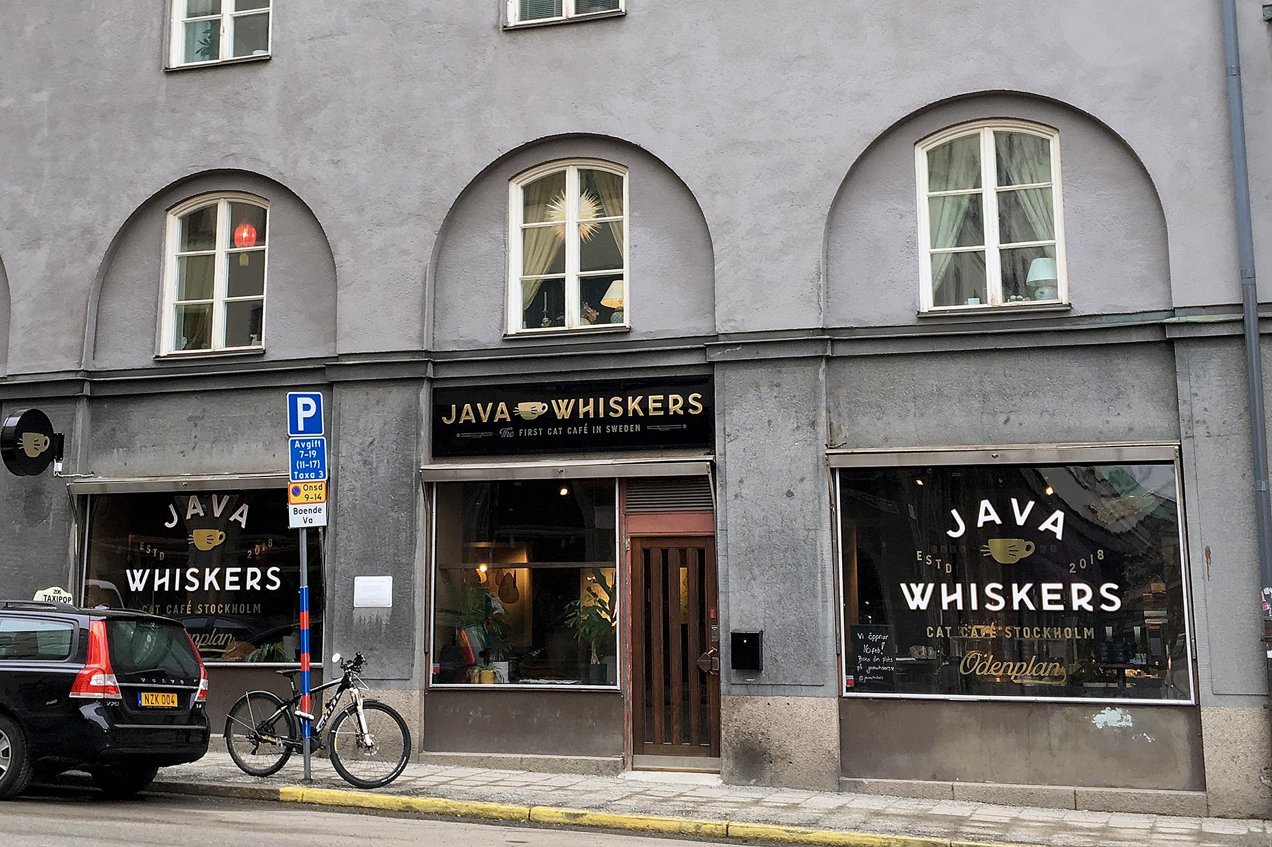 Java Whiskers Kattcafé Surbrunnsgatan
