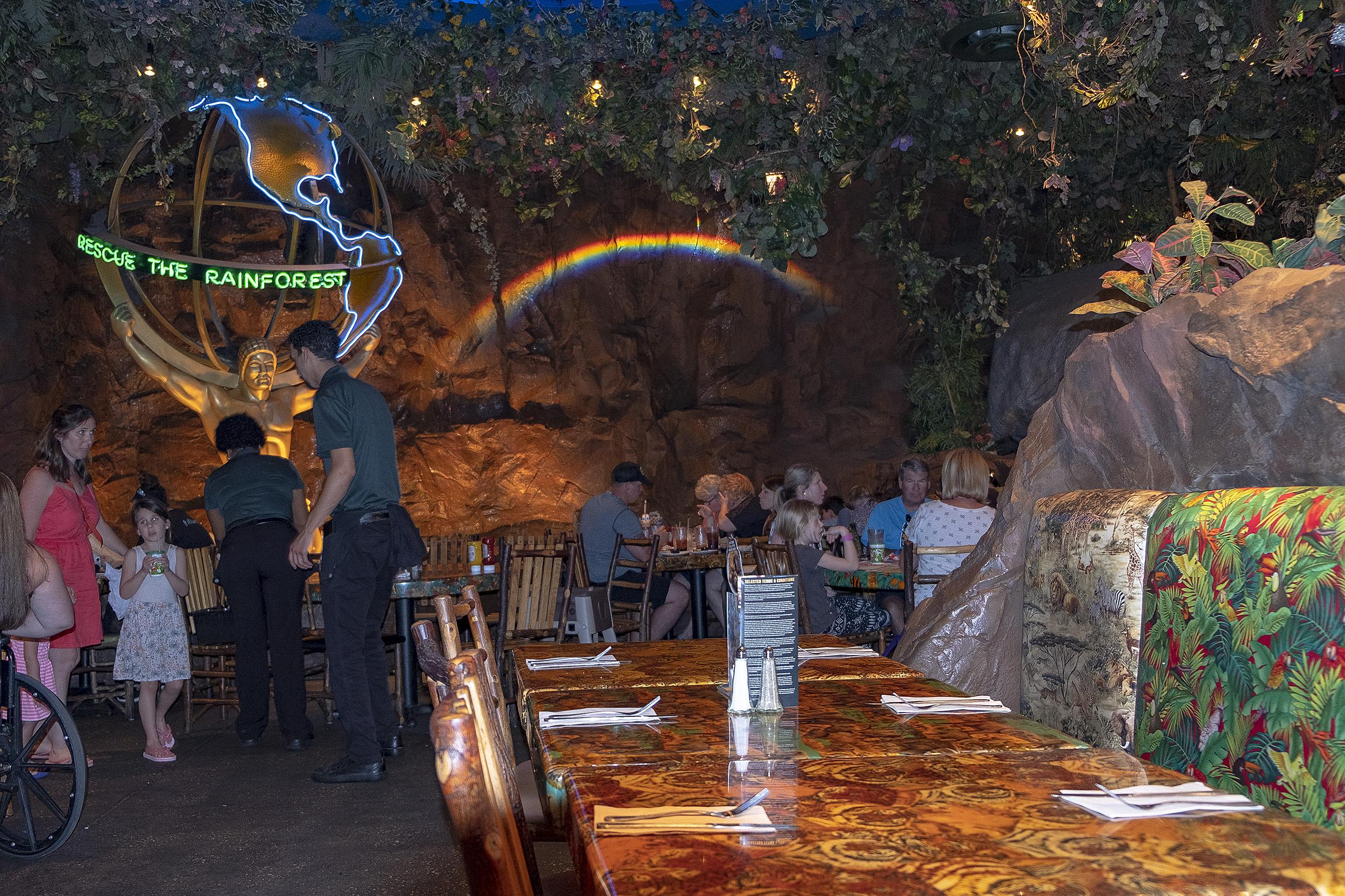 Disney Springs Rainforest cafe