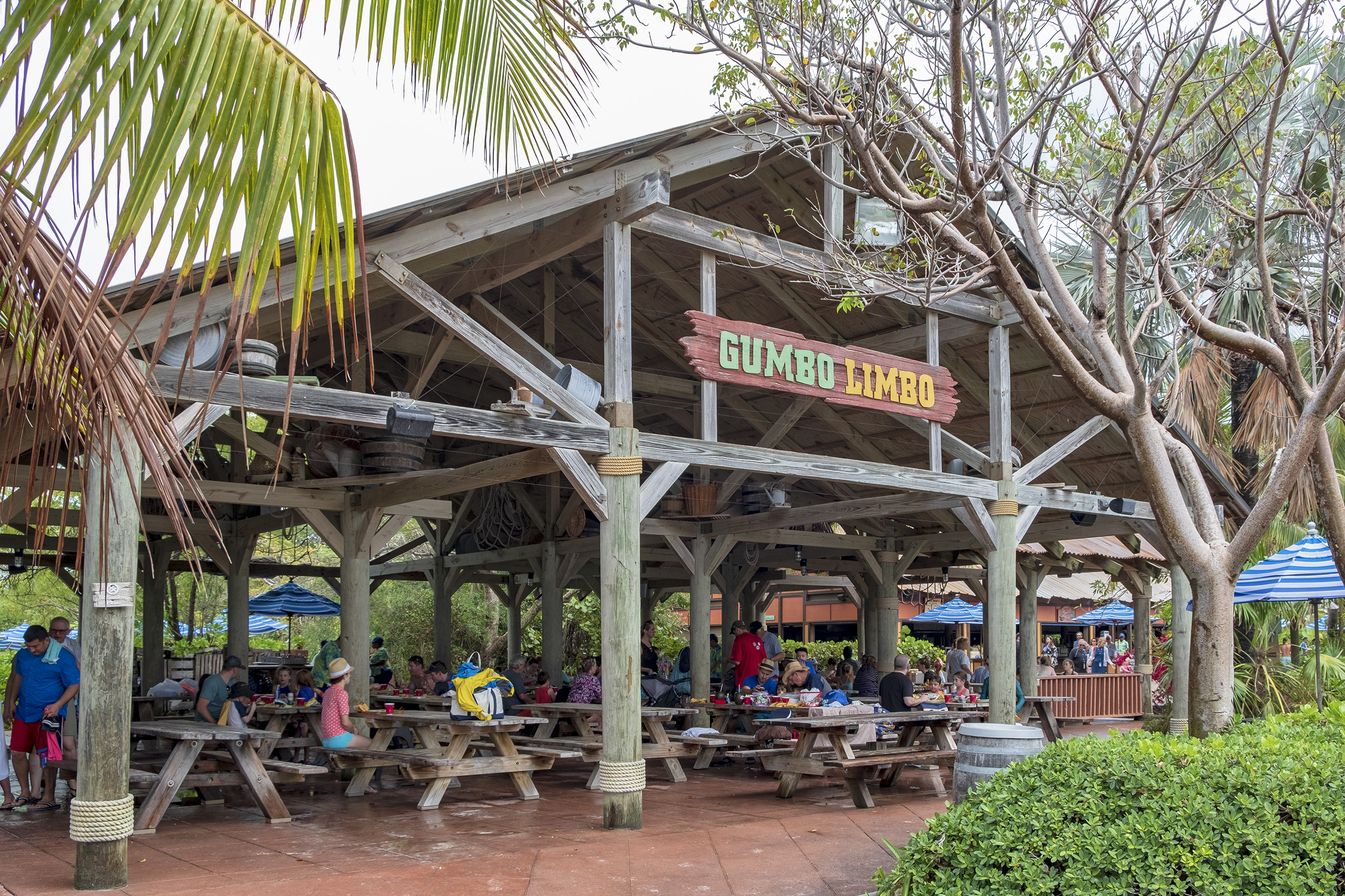 Castaway Cay Gumbo Limbo