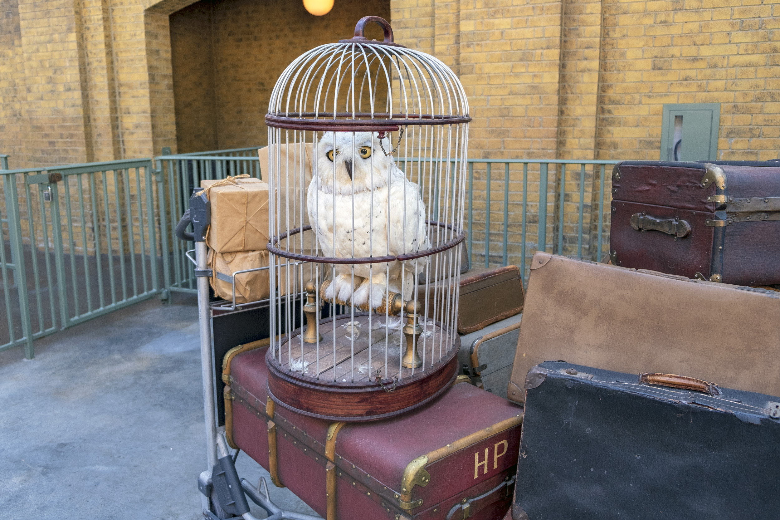 Harry Potters uggla Hedwig. The Wizarding World of Harry Potter