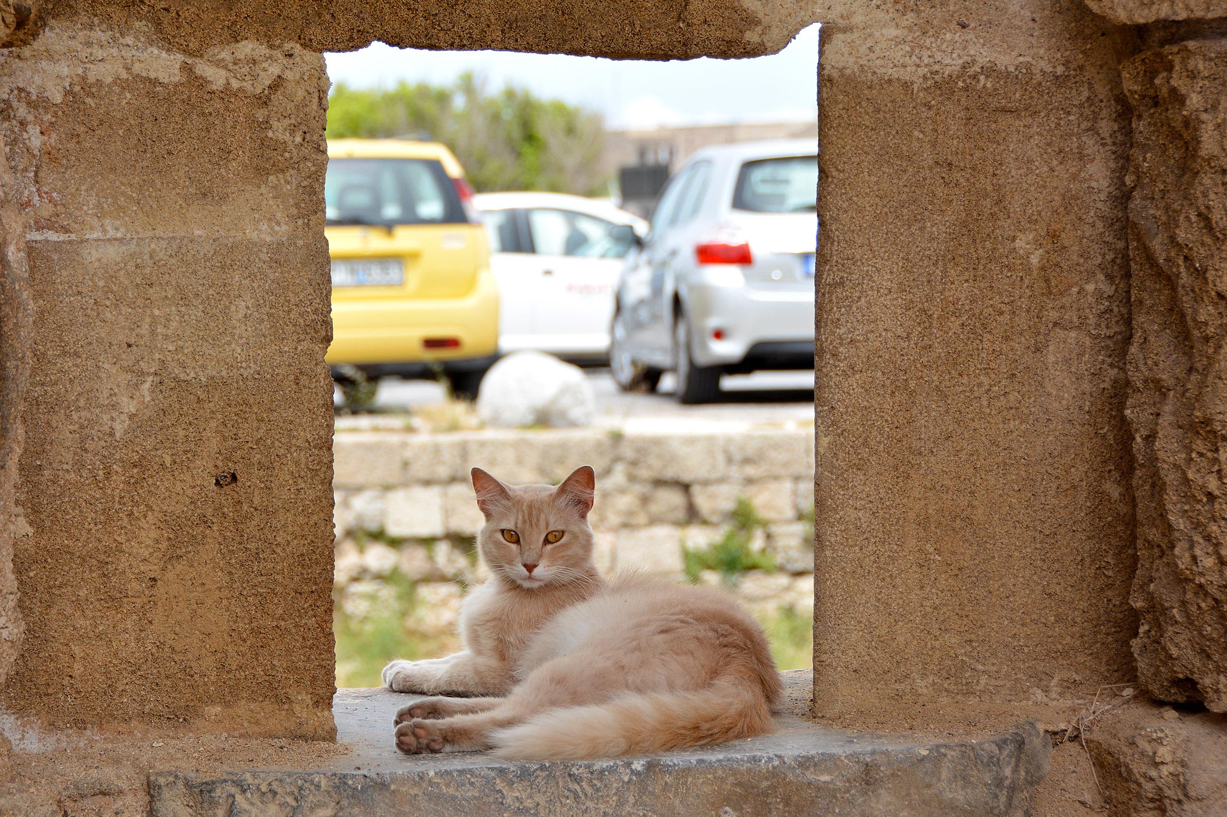 Internationella kattdagen. Katt i Rhodos gamla stad, Grekland.
