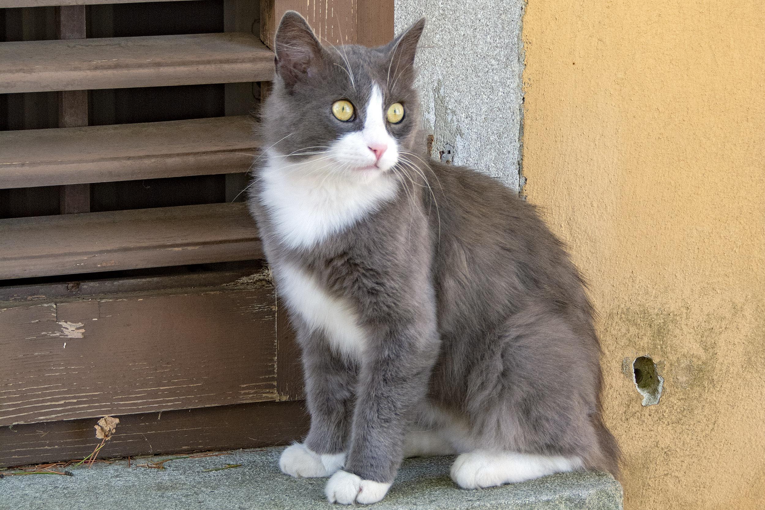 Internationella kattdagen. labin Kroatien.