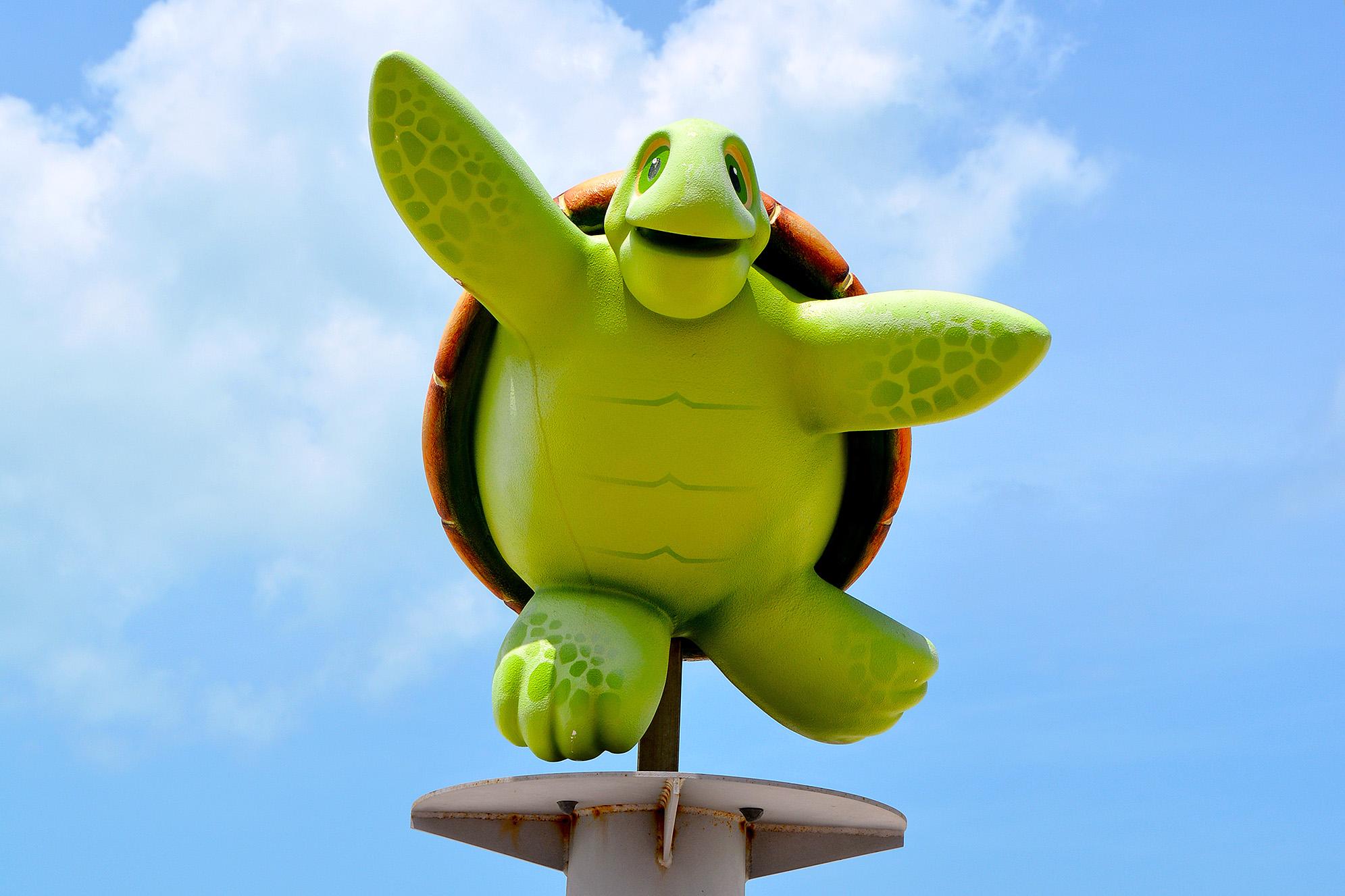 Sköldpadda Clearwater Beach