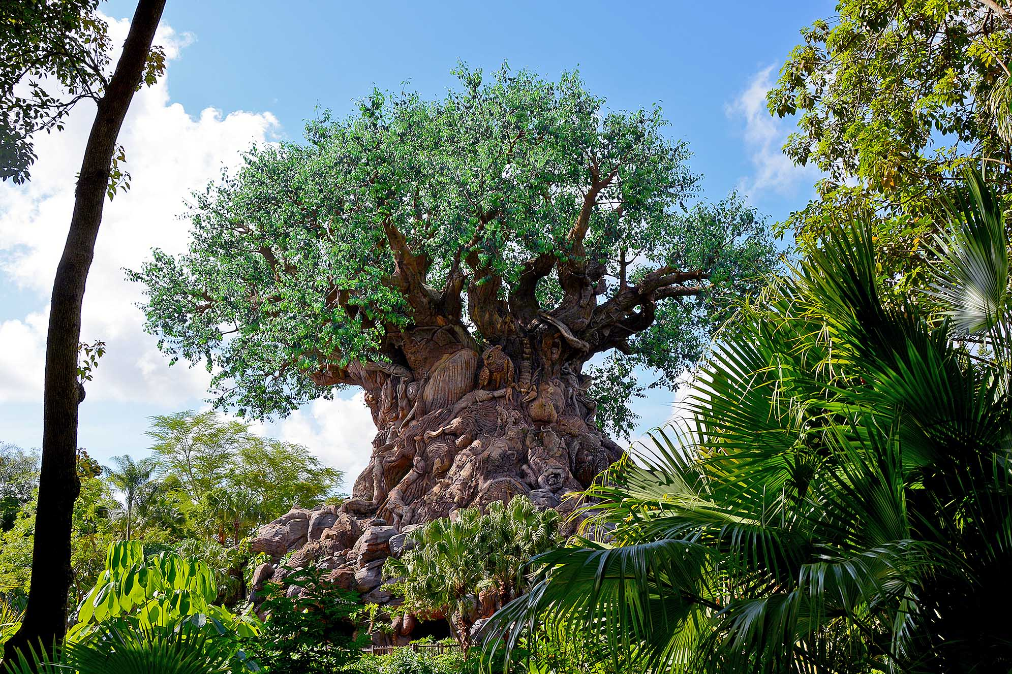 Tree of Life i Disney's Animal Kingdom.